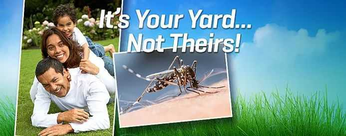 It's your yard, not theirs